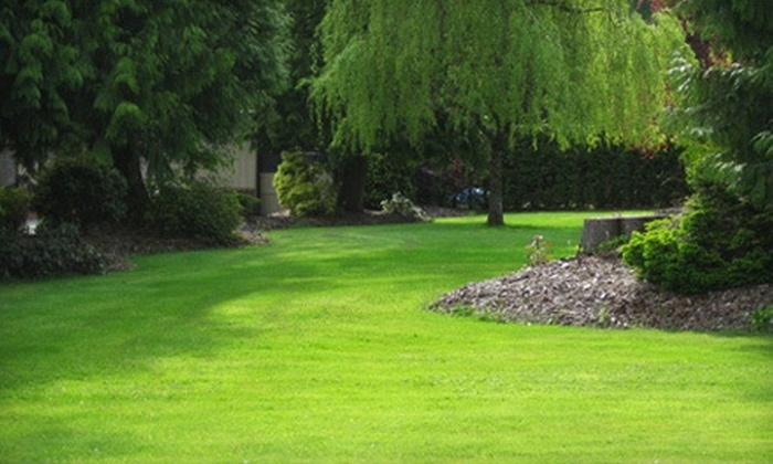 Ace of Blades - Stittsville - Basswood: Full-Yard Core Aeration, Grub Control, or Both from Ace of Blades (Up to 67% Off)