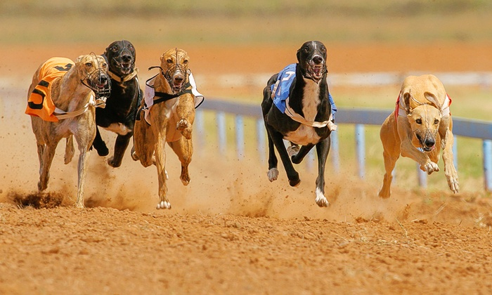 Love The Dogs - Wimbledon: Greyhound Racing With Burger and Drink For Two for £8 At Love The Dogs (Up to 74% Off)