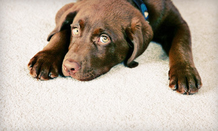 Nationwide Carpet Cleaning - Burnside: Carpet, Upholstery, or Rug Cleaning from Nationwide Carpet Cleaning (Up to 61% Off)