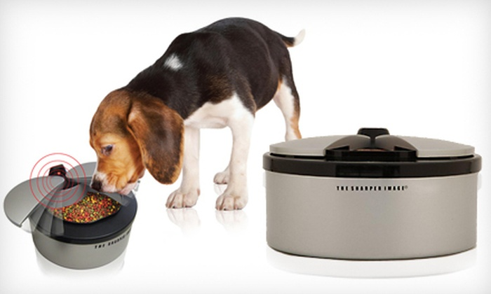 Sharper Image Motion-Activated Pet Bowl: $19 for a Sharper Image Motion-Activated Pet Bowl ($39.99 List Price)