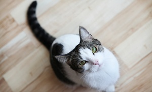 Cat Care Clinic: Feline Health Exam with Optional Treatment Package at Cat Care Clinic (Up to 81% Off)