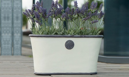 Two Royal Elite Planters in Choice of Colour