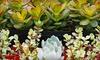 Heights Plant Farm - Houston: $15 for $30 Worth of Plants and Garden Accents at Heights Plant Farm