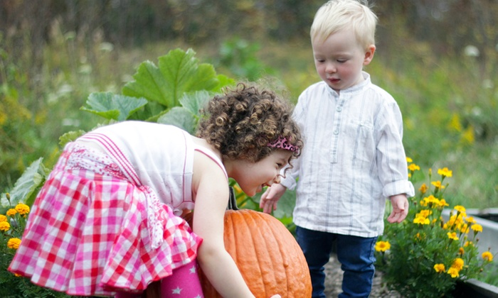 Sarah Jamal Photography - St Catharines-Niagara: C$39 for 30-Minute Pumpkin-Patch Session for Up to Five from Sarah Jamal Photography (C$150 Value)