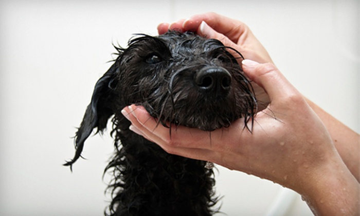 Kaileigh Pet Day Spa - Lexington-Fayette: Grooming Services for a Small, Medium, or Large Dog at Kaileigh Pet Day Spa (Up to Half Off)