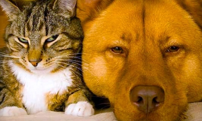 Ellis County SPCA - Creek Wood: $32 for a Pet Adoption Package with Microchip and Vaccinations at Ellis County SPCA in Waxahachie (Up to $110 Value)