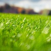 Up to 70% Off Lawn Care from Grasshopper Gardens