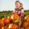 Half Off Pumpkin-Patch Outing at Blase Family Farm