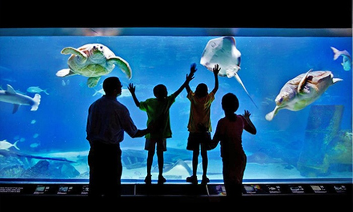 Adventure Aquarium and Elmwood Park Zoo - Multiple Locations: $175 for One-Year Family Membership at Adventure Aquarium and Elmwood Park Zoo ($285 Value)