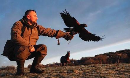Riverside Falconry