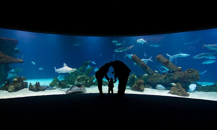 Albuquerque aquarium and botanical gardens garden ftempo for Aquarium botanic