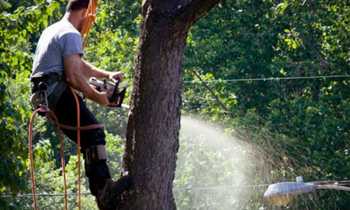 EPS Tree Care - Boise: $75 for Up to Three Man-Hours of Tree Services from EPS Tree Care (Up to $225 Value)