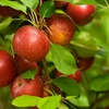 Up to 42% Off at B.J Reece Orchards
