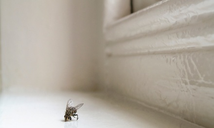 $49 for Interior and Exterior Pest-Control Treatment from A1 Home Pest Control ($125 Value)