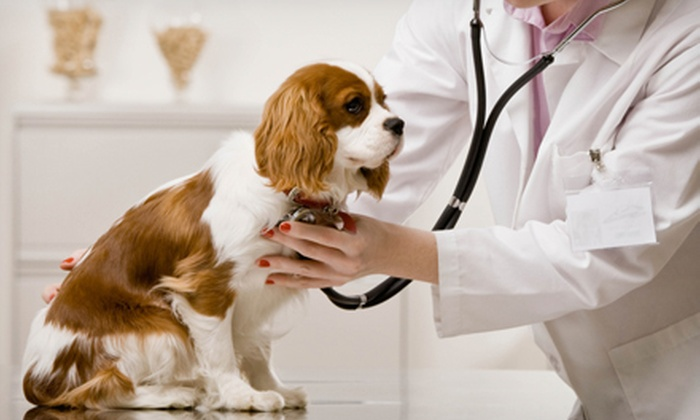 Lake Pine Animal Hospital - Apex: Dog Hygienics Package with Bath or Annual Exam Package with Shots at Lake Pine Animal Hospital (Up to 71%)