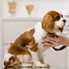Up to 71% Off Dog Care at Lake Pine Animal Hospital