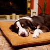 Up to 61% Off Furhaven Memory-Foam Orthopedic Pet Beds