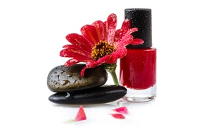 Glitz&Glamor: One or Three Shellac Manicure at Glitz&Glamor (Up to 61% Off)
