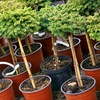 Half Off Plants and Trees