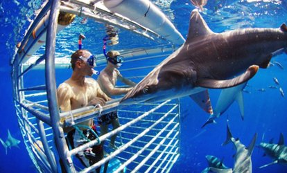 image for $86.76 for a Shark-Cage Diving Encounter for One from Hawaii Shark Encounters ($115.50 Value)