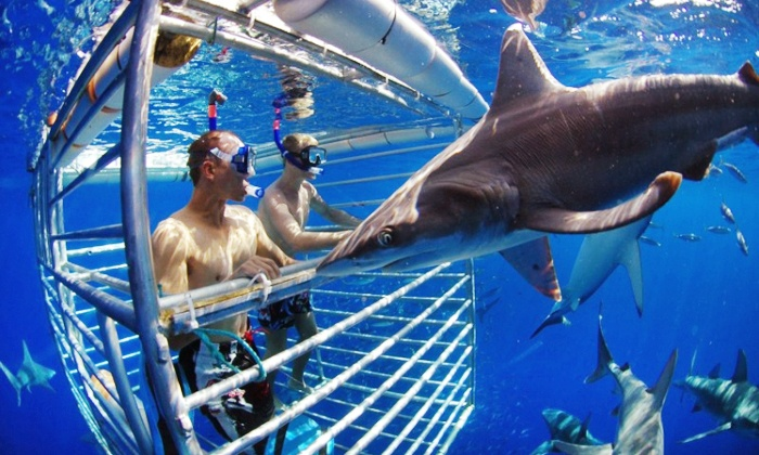 Hawaii Shark Encounters - North Shore: $86.75 for a Shark-Cage Diving Encounter for One from Hawaii Shark Encounters ($115.50 Value)