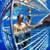 25% Off Shark-Cage Diving