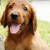 Up to 51% Off Dog Grooming in Glendale