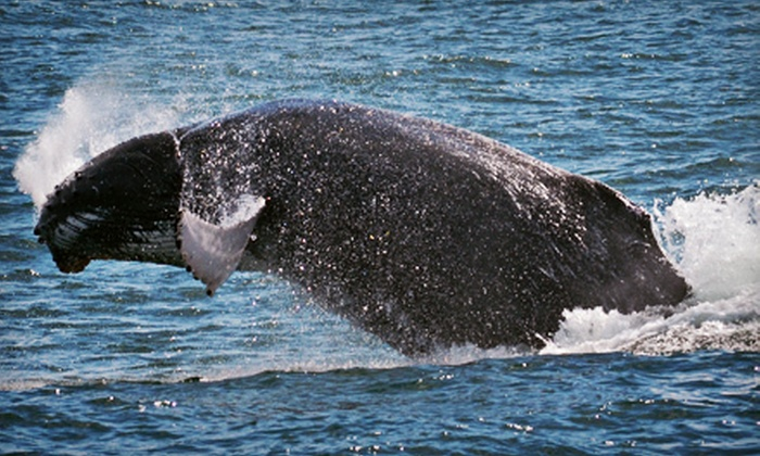 Cape May Whale Watcher - Cape May: Whale- and Dolphin-Watching Tour for One, Two, or Four from Cape May Whale Watcher (Up to 58% Off)