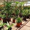 Up to 55% Off Desert Plants & Garden Accessories