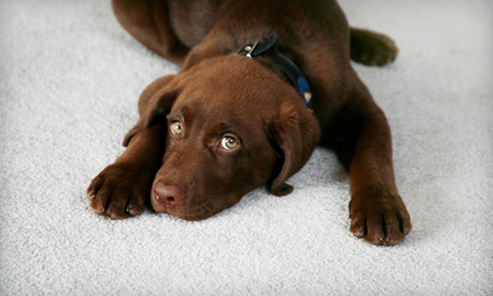 Pro Clean Carpet Care - Denver: Carpet Cleaning and Pet-Stain and Odor Removal from Pro Clean Carpet Care (Up to 65% Off). Three Options Available.