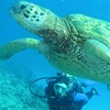 Up to 54% Off at Hawaii Eco Divers