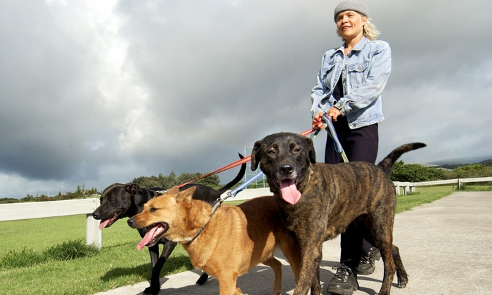 Haute Dogs Nyc - New York City: $45 for $100 Worth of Dog Walking — Haute Dogs NYC