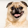 Up to 76% Off Dog Grooming or Walking Services