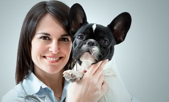 Up to 71% Off Veterinary Exam and Grooming