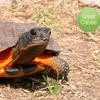 $10 Donation to American Tortoise Rescue