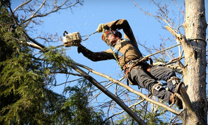 Tree Needs Tree Service - Fairmont Park: $99 for Three Man-Hours of Tree Services from Tree Needs Tree Services ($225 Value)