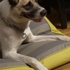 Reversible Water Repellant Memory Foam Pet Beds