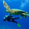55% Off Scuba Diving Course at Undersea Divers
