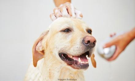 Chequeo y 1 vacuna para perro, gato, hurón o conejo en Zoa Veterinaria (hasta 84% de descuento)