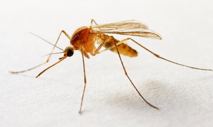 Sovereign Pest Control - Austin: $64 for Preventative interior and Exterior Home Pest Spray from Sovereign Pest Control ($300 Value)