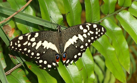 Butterfly-Exhibit and Museum Visit for Two or Four at World of Wings (Up to Half Off)