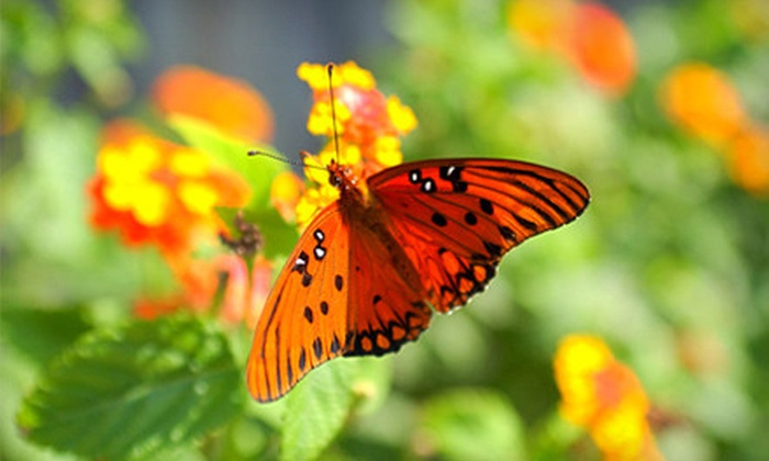 Newport Butterfly Farm - Tiverton: Visit for Six Adults or Kids to The Butterfly Zoo (Up to 67% Off). Two Options Available.