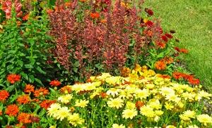 Giant Sunflower Mat - Get Your Very Own Garden Full of ...