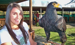 Eagle Encounters: Entrance for Two and Personal Eagle Encounter for One from R126 at Eagle Encounters at Spier (30% Off)