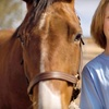 51% Off Private Horseback-Riding Lessons