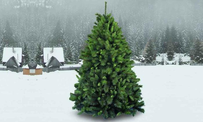 Regali Di Natale Groupon.Albero Di Natale Extrafolto Ecologico Modello Xmas Dream Disponibile In 4 Dimensioni
