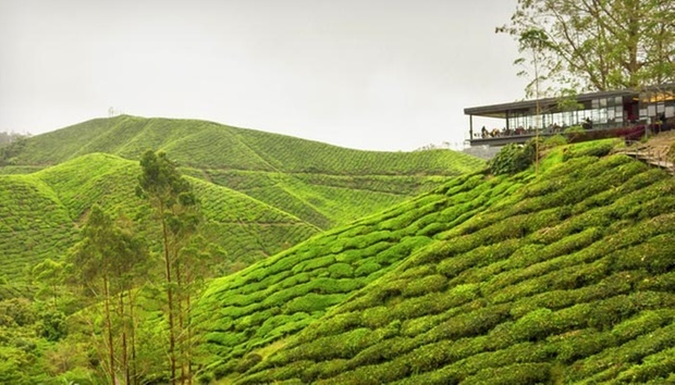 Cameron Highlands: 4* Hotel Stay 0