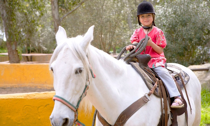 The Joni Fitts School of Horsemanship - Pinnacle Peak Equestrian Center: Two or Four Private or Group Horseback-Riding Lessons at The Joni Fitts School of Horsemanship (Up to 49% Off)