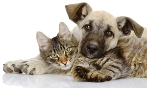 Revisión para perro o gato por 16,95 € y con vacunas desde 24,95 €