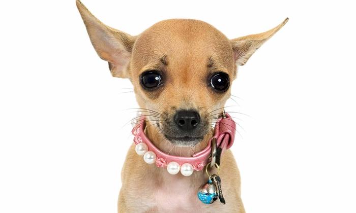 Pet Lodge USA of Boardman - Boardman: Two Nights or One Week of Pet Boarding at Pet Lodge USA of Boardman (50% Off)